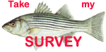 Maryland Department of Natural Resources encourages anglers to get involved in striped bass management this spring by participating in the Maryland Fisheries Service's annual striped bass volunteer angler survey.
